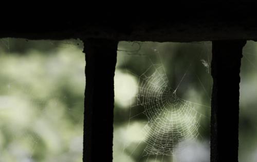 SpinnenGitter-1